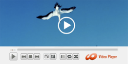 Mac Video Media Player